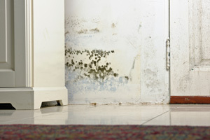 Expert mold solutions in Little Rock