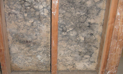 Heavy Mold Growth on Wood Ceiling Rafters in Arkansas
